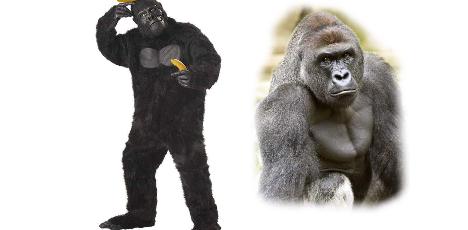 Why your Harambe costume is not funny